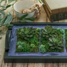 DIY Picture Frame Tray Garden