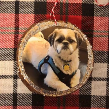 Wood Slice Pet Ornament by Mom Home Guide