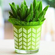 Stenciled Succulent Container